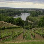 Vineyards in France near the Garonne River in the Bordeaux area