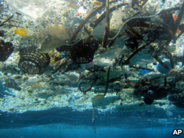 Plastics Blamed for Harm to Sea Environment