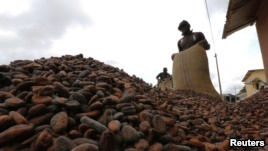 Ghana's Currency Slump Spurs Increase in Cocoa Smuggling