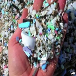 Plastic trash in oceans enters the marine food chain, hurting or killing ocean life.