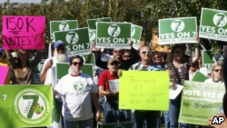 Supporters of medical marijuana gather in Little Rock, Arkansas to support a ballot measure to permit people with some medical problems permission to buy or grow marijuana to ease their symptoms.